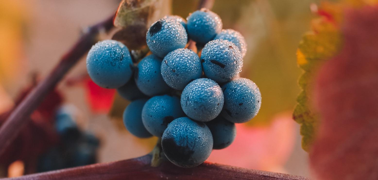 monastero-frati-bianchi-grappolo-uva-mobile